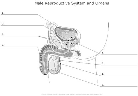 reproductive picture 14