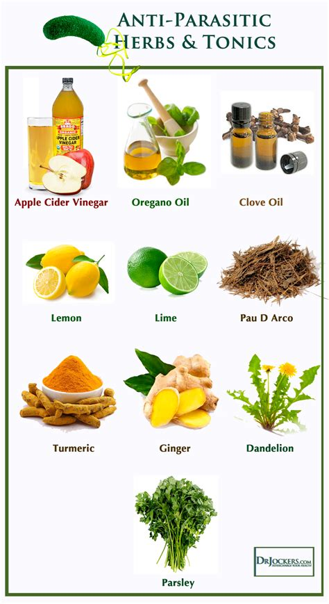 anti-parasitic herbal tea picture 2
