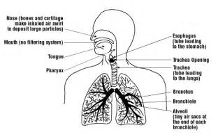 how does calcium release during respiratory alkalosis affect picture 10