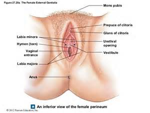 vaginal pictures at age 20 picture 5
