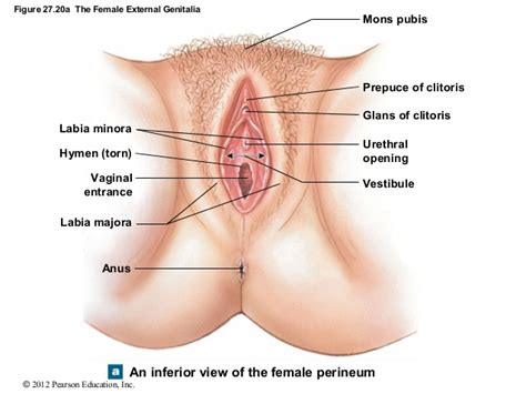 contact dermais near vaginal opening picture 10