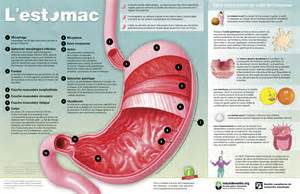 information on gastrointestinal picture 1