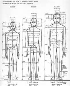 male anatomy, what is the size of a picture 5