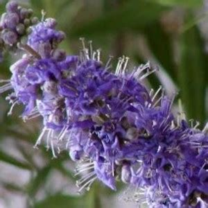what herbs promote prolactin picture 14