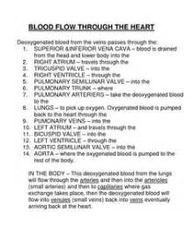 Heart blood flow order picture 7