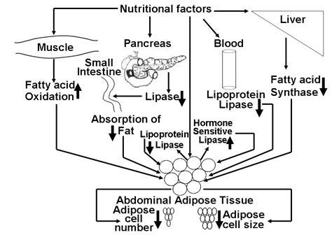 alpha lipoic acid picture 9