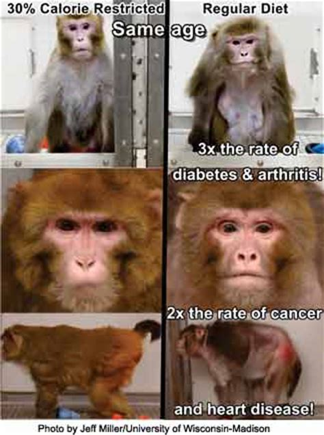 caloric restriction and aging and skin picture 13