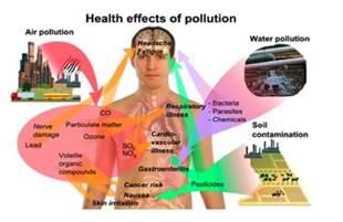 what is le cerbvas disease picture 17