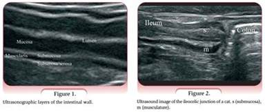 feline intestinal lymphoma picture 5