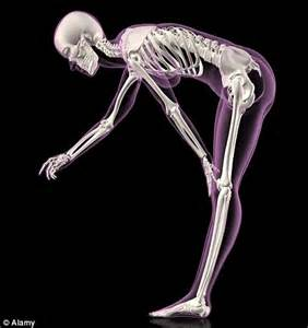aging of a skeletal muscle 18 lee im picture 7