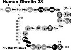 tab human growth hormone picture 5