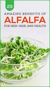alfalfa health benefits picture 11