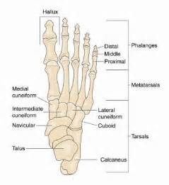 big toe metatarsal phalangeal joint foot sleeve picture 5