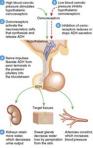 low thyroid hormone and low breast milk production picture 15