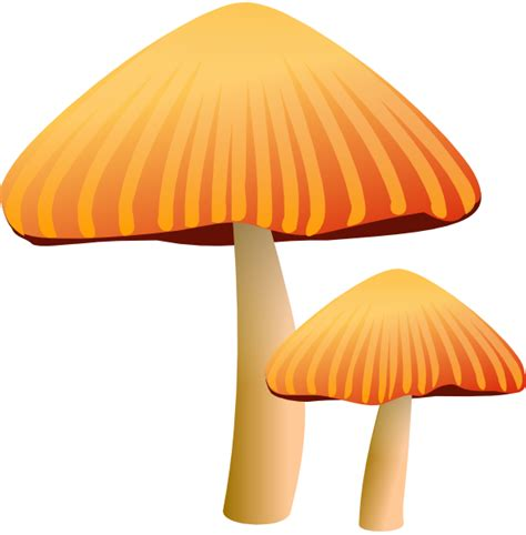 yellow fungus picture 13