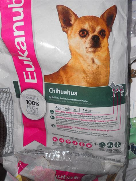 chihuahua diet picture 13