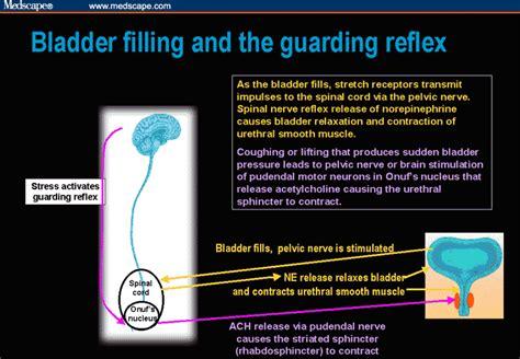 female bladder filling picture 10