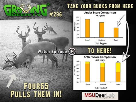 will deer antler increase size of s picture 3
