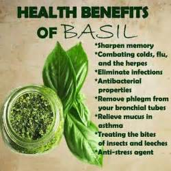 health benefits of kinchay leaves picture 2