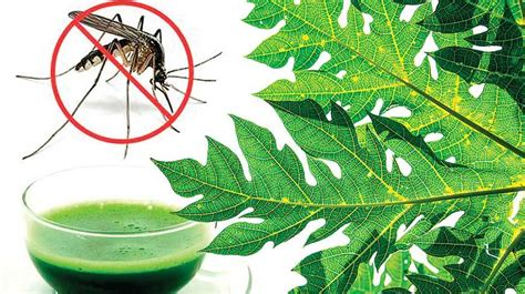 does papaya leaves helps for joint pains picture 1