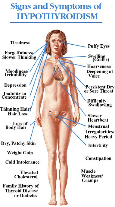 circulation and thyroid picture 10