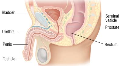 can inlarged prostate cause penis pain picture 5