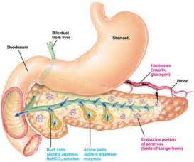 high levels of enzymes in pancreas and liver picture 3