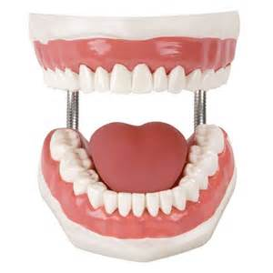 dental h picture 17