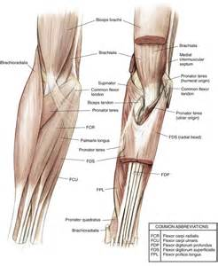 distal radial ulnar joint picture 5