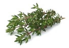 sls for herbal studies picture 2