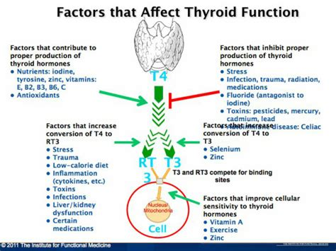 blood tests for low thyroid function picture 5