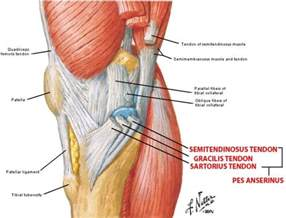 medial knee pain + joint space picture 2