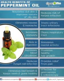 uses for peppermint oil picture 3