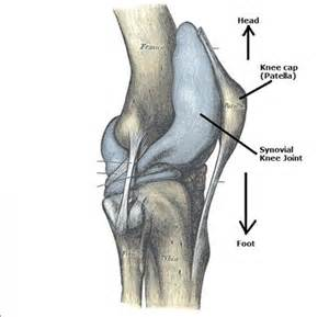 fluid joint picture 19