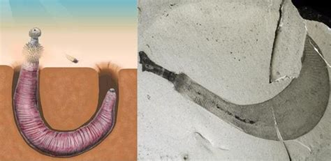 formicophilia, worm in penis picture 2
