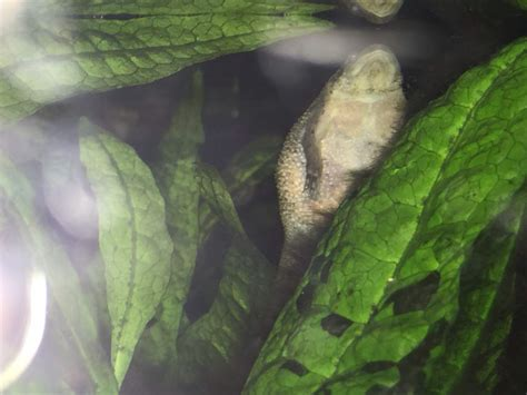 frog skin sungl es picture 11