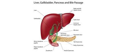 private clinic gallbladder removal calgary picture 6