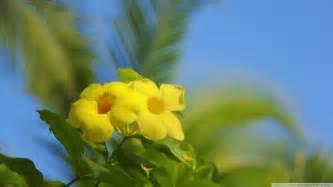 +hawaiin silky herbal picture 21