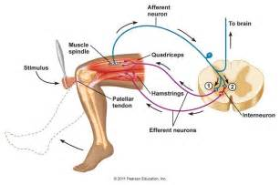 where can i find streach expercise for joint pain picture 7