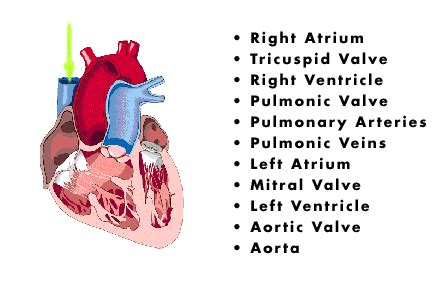 Blood flow through the heart animation picture 7