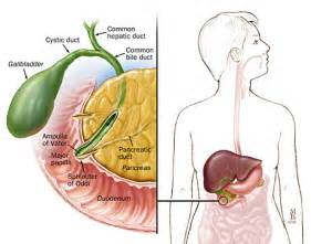 bladder does dysfunction gall picture 17