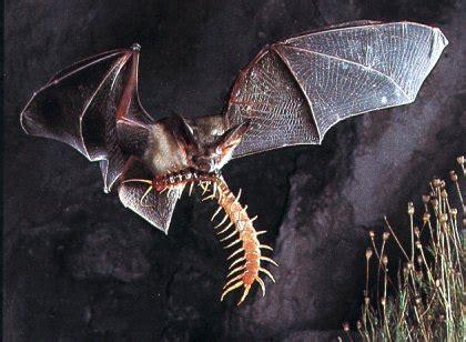 bat diet mosquito picture 10