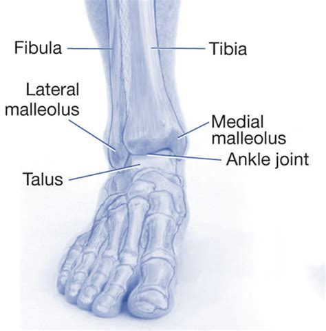 ankle joint picture 3