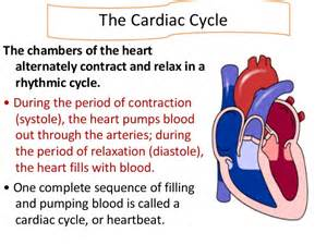 Blood flow through the heart animation picture 5