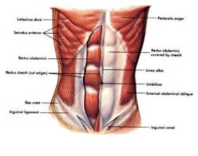 abdominal muscle pull picture 11