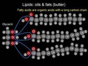 Lipids picture 2