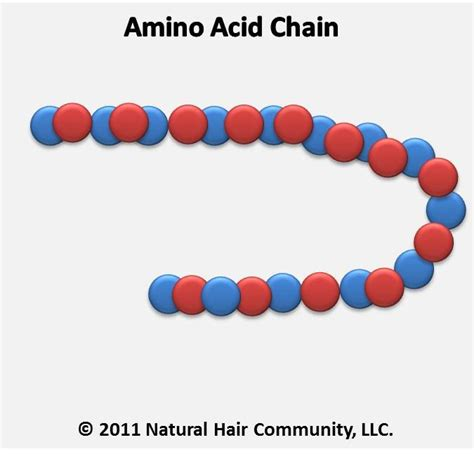 amino acid for hair picture 11