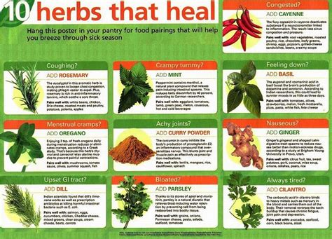 health herbal picture 5