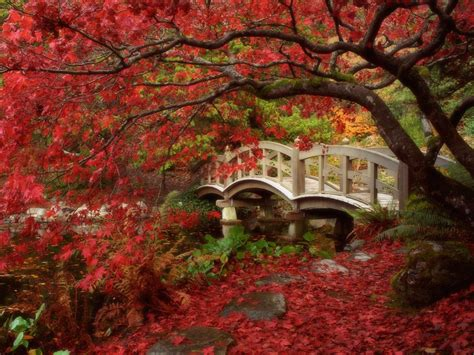 girls playing with boy's penis picture 1