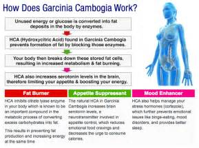 garcinia cambogia how long to see result picture 1